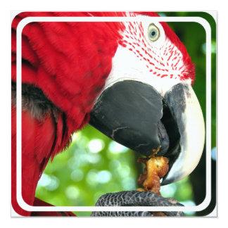 Red Parrot Invitation