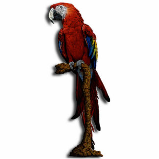 Red Parrot Photo Sculpture