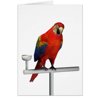 Red Parrot Scarlet Macaw Card