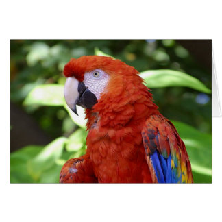 Red Parrot Template Card