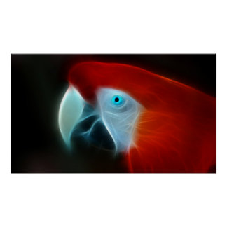 Red parrot with blue eyes posters