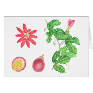 Red Passion Fruit Botanical Card