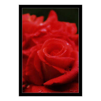 Red Passion Roses Poster