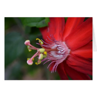 Red Passon Flower Greeting Card