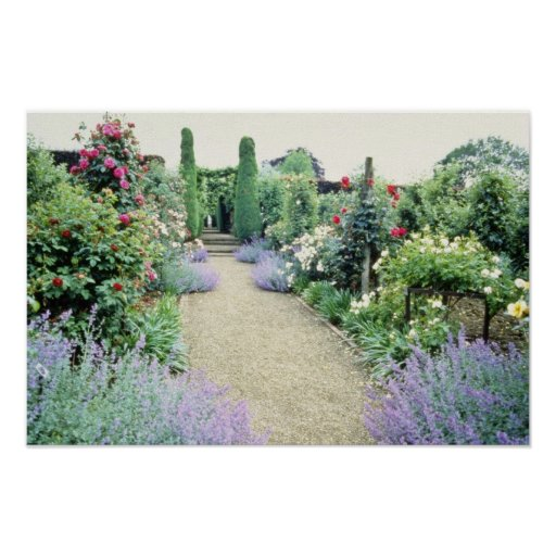 Red Path With Catmint And Hybrid Roses flowers Poster