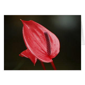 Red Peace Lily Editable Card