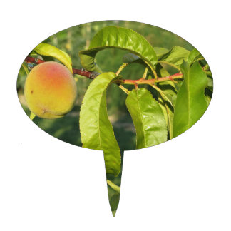 Red peaches on tree branches in a cultivated land cake topper