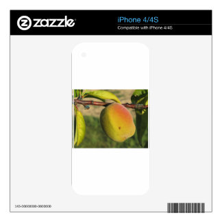 Red peaches on tree branches in a cultivated land decals for the iPhone 4