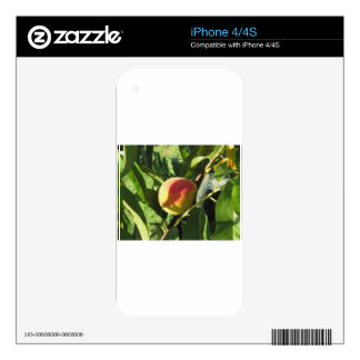 Red peaches on tree branches in a cultivated land iPhone 4 decal
