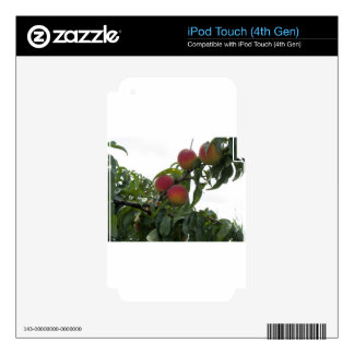 Red peaches on tree branches iPod touch 4G skin