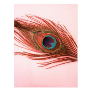 Red Peacock Feather Postcard
