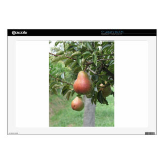 """Red pears hanging on the tree . Tuscany, Italy 17"""" Laptop Decals"""