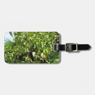 Red pears on tree branches bag tags