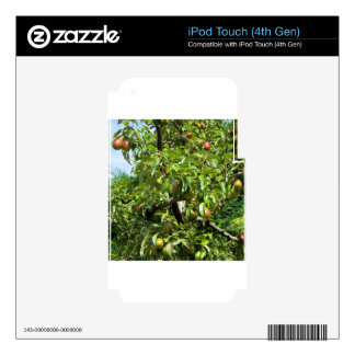 Red pears on tree branches iPod touch 4G skin