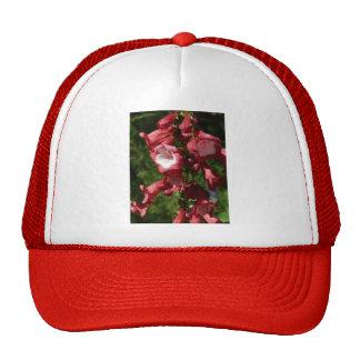 red penstemon trucker hats