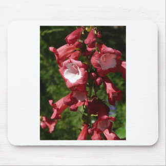 red penstemon mouse pad