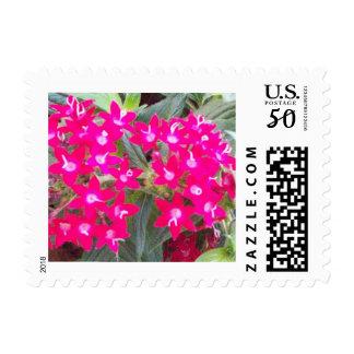 Red Pentas Flowers Postage Stamps