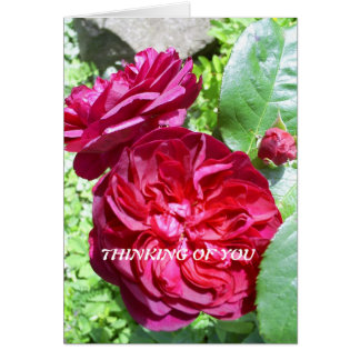 Red Peony, blank greeting card