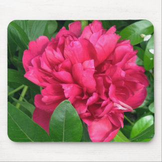 Red Peony Blossom - photograph Mouse Pad