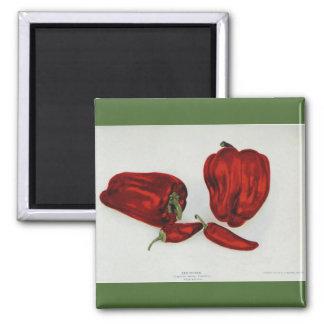 Red Pepper - Vintage Image 2 Inch Square Magnet