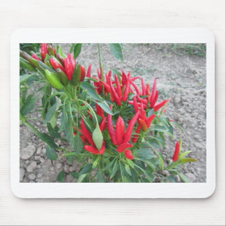 Red peppers hanging on the plant mouse pad