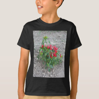 Red peppers hanging on the plant T-Shirt