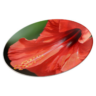 Red Petal and Anther with Pistil of Hibiscus Dinner Plate