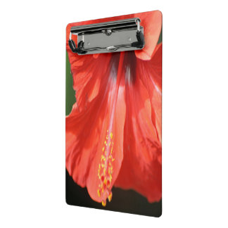 Red Petal and Anther with Pistil of Hibiscus Mini Clipboard