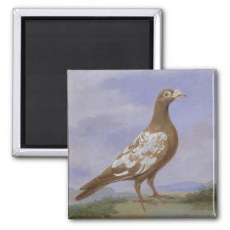 Red Pied Carrier Pigeon (oil on canvas) Magnet
