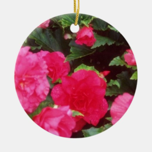 Red Pink and red begonias, Victoria, British Colum Double-Sided Ceramic Round Christmas Ornament