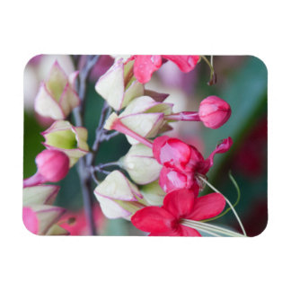 Red Pink and White Tropical Flowers Magnet