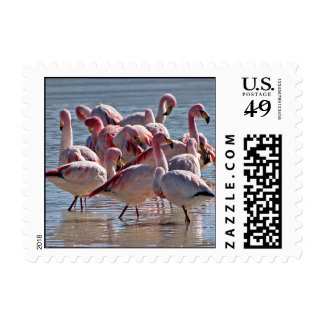 Red Pink Flamingos in Water Postage
