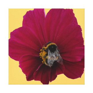 Red Pink poppy Flower with a Bumble Bee Canvas Print