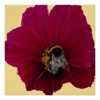 Red Pink poppy Flower with a Bumble Bee Poster