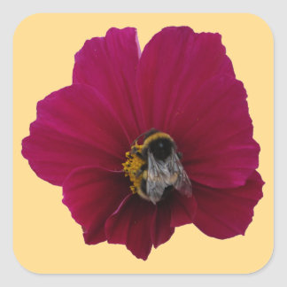 Red Pink poppy Flower with a Bumble Bee Stickers