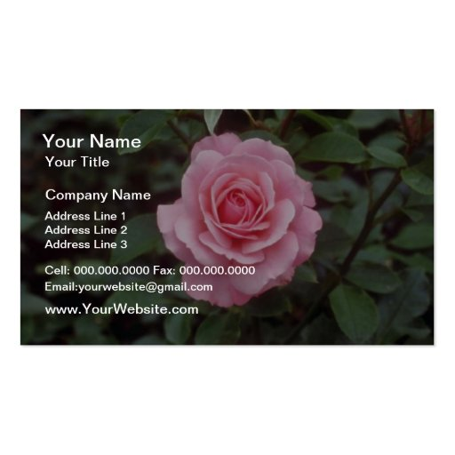 Red Pink roses, Victoria, British Columbia, Canada Double-Sided Standard Business Cards (Pack Of 100)