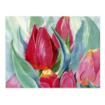 Red & Pink Tulips Postcard