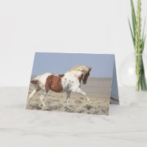 Red Pinto Stallion Leaps Wild Horse Greeting Card