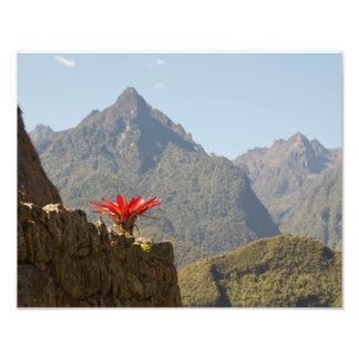 Red Plant in the Mountains of Machu Picchu Photo Print