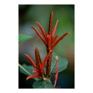 Red Plant Poster