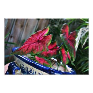 Red Plants Art Photo