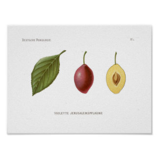 Red Plum Poster