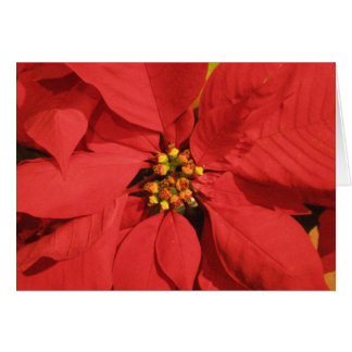Red Poinsettia Cards
