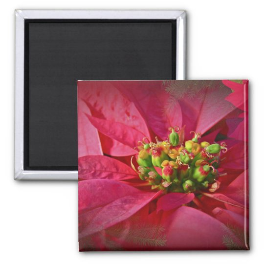 Red Poinsettia - Christmas Magnet