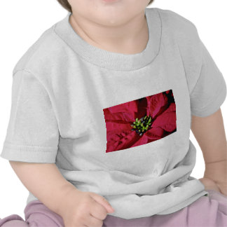 Red Poinsettia Closeup flowers T Shirts