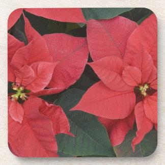 Red Poinsettia Detail (Euphorbia pulcherrima) Beverage Coaster