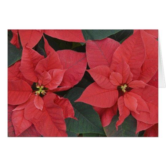 Red Poinsettia Detail (Euphorbia pulcherrima) Card