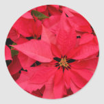 Red Poinsettia Flowers Floral Holiday Greetings Classic Round Sticker