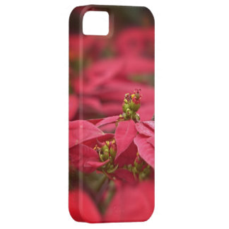 Red Poinsettia Flowers iPhone SE/5/5s Case
