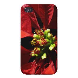 Red Poinsettia Phone 4 Case iPhone 4 Covers